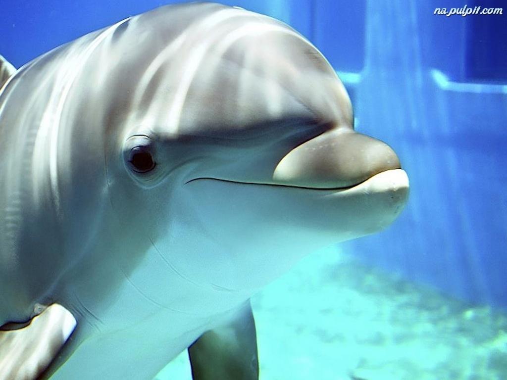 delfin-basen-woda.jpeg